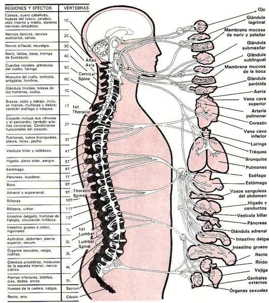 Como curar la columna vertebral a los dolores en los riñones